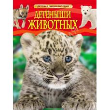 Книга Росмен Энц. ДИ Детеныши животных